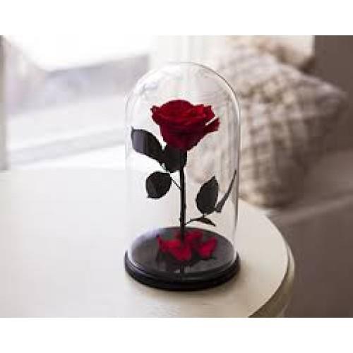 Купить на заказ Заказать Роза в колбе Красная с доставкой по Степногорску с доставкой в Степногорске